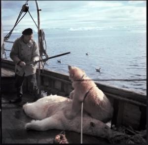 Caza-del-Oso-Polar-Mi-foto