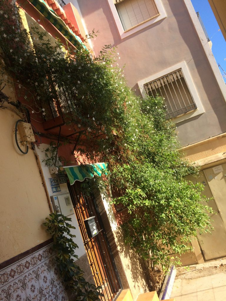 Jazmín cubriendo una fachada del barrio Santa Cruz